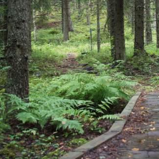 Sappee-Särkijärvi reitin varrelta